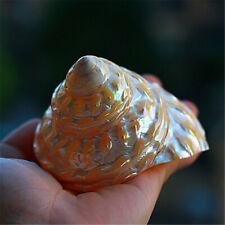 8-12 cm Natürliche Muschel Fluoreszierend Muscheln Turmform Ornament Dekor