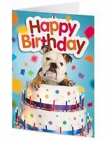 English Bulldog inside a giant birthday cake birthday card