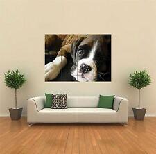 BOXER CUCCIOLO PUPPY DOG NUOVO GIGANTE POSTER WALL ART PRINT PICTURE g318