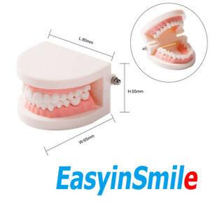 Dental Teeth Model Standard Teaching Typodont Demonstration for Kids Easyinsmile