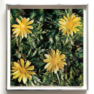 Andy Warhol Rain & Flowers 4 Daisy Lenticular 1970 Framed Pristine JKLFA.com