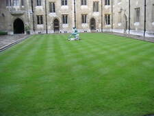 LAWN GRASS SEEDS - Dark Green Soft Turf Grass - Cynodon Dactylon - 1000 Seeds