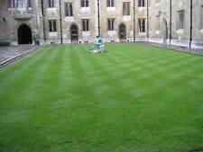 LAWN GRASS SEEDS - Dark Green Soft Turf Grass - Cynodon Dactylon - 1000 Seeds