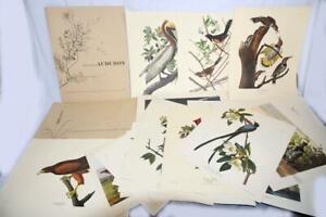 20 VINTAGE 1960 AUDUBON BIRD COLOR LITHOGRAPHS FINE ART PRINT SET-2 PORTFOLIOS