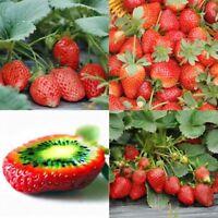 100pcs Erdbeersamen Fragaria Samen Seltene Leckere Strawberry Kiwi Samen Frucht