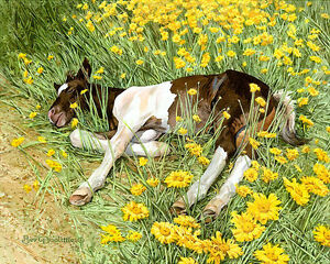 Bev Doolittle SPRING BREAK giclee, Pinto Foal, Horse  A/P#138/160