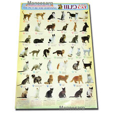 CATS OF THE WORLD POSTERS ULTIMATE BREEDS CAT POSTER MORE THAN 40 BREED SPECIES