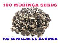 100 Organic Moringa Seeds, 100 Semillas De Moringa Organica