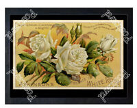 Historic Atkinson's Essence of White Rose perfume, c.1890 Advertising Postcard