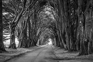 STUNNING BLACK & WHITE WOOD TREES PATH CANVAS PHOTO PICTURE 20inch x 30inch