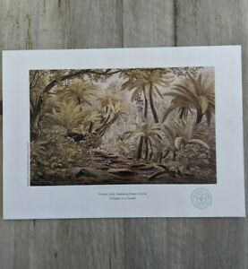 Ferntree Gully, Dandenong Ranges print VON GUERARD limited Edition WEEKLY Times