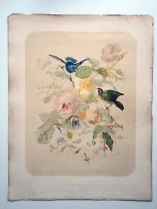 """Large Antique Print of Birds 23""""x18"""" (1880s French Eidographie/Chromolithograph)"""