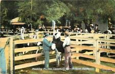 C-1910 Ostrich Farm Plucking Plumes California Cawstons Rieder postcard 6731