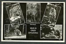 Westerschouwen Kampeerboerderij Blom 'Schuur 1901' Wild in onze omgeving