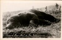 Vintage RP Postcard, Hunting theme, Record Bear in Yukon, pb1