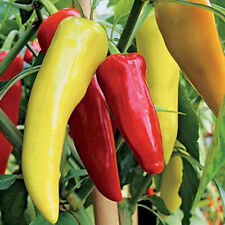 SWEET HUNGARIAN BANANA PEPPER SEEDS!    Easy!      50 SEEDS