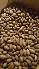 GEORGIA WHOLE PECAN'S IN SHELL MED. NUT 1 lb  MAIL WT. 2017 NEW CROP