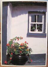 Irish Postcard POT PLANTS at Window Ireland People & Places T Kelly Hinde 4x6