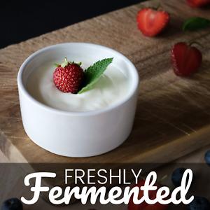 Certified Organic Lebanese Yoghurt Starter Culture