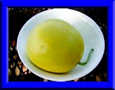 Sakata's Sweet Melon! 25 Seeds! Combined S/H! See My Store For Rare Seeds!