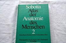Libro el Atlas de Sobotta Anatomía de las personas 2 Pecho Tripa Piel Pélvica