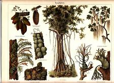 1895 EPIPHYTES AIR PLANTS Antique Chromolithograph Print