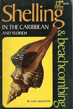 Shelling & Beachcombing in the Caribbean and Flori