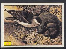 Panini Birds 1978 Sticker No 35 (S413)