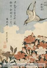 Genkou Youshi Manuscript Paper - Notebook for Japanese Writing: 7 9781519554550