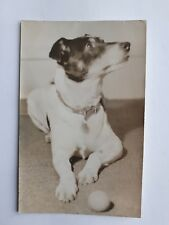1960s B/W Photograph. English Pet Dog with Ball/ Jack Russell Terrier