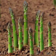 20Pcs Asparagus Seeds Organic Heirloom Rare Green Vegetable Perennial Garden New