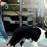5M Dog Retractable Leash Automatic Cat Lead Extending Puppy Walking Favor L D2F2