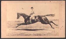 Hippisme. Cheval de course - Ceylon. Photographe Neurdein. Vers 1870. CDV