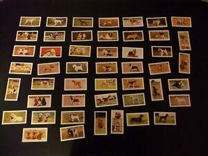 Dogs 1961 Hornimans Tea Cards - Choice of Cards
