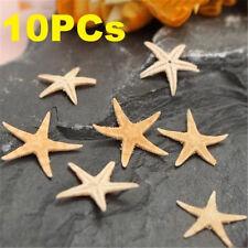 10PCs Mini Natural Starfish Shell Beach Sea Star Landscape Crafts Making Decor ♫