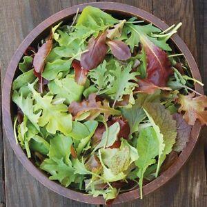Mesclun Mix Seeds USA Garden Vegetable Spring Mix Lettuce Salad Spinach For 2021