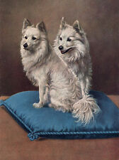 POMERANIAN SPITZ CHARMING DOG GREETINGS NOTE CARD TWO DOGS SIT ON CUSHION