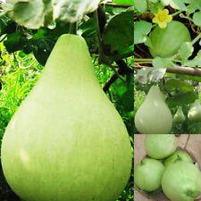 20pcs Gourd Seed Spoon Bottle Gourd Lagenaria Siceraria Garden Seeds Vegetable
