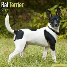 Rat Terrier Calendar 2021 Premium Dog Breed Calendars