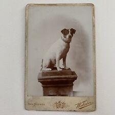 Antique Cabinet Card Photo Sweet Dog Portrait Jack Russel Terrier Des Moines IA