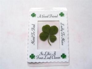 real four leaf clover,  goodluck gift, keepsake, lucky clover,genuine 4 leaf