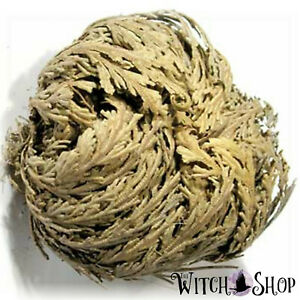 1 Dried Rose of Jericho Plant Resurrection Flower Wicca Witch Spell Supply Herb