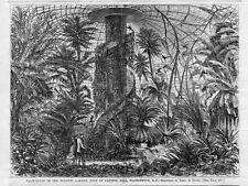 WASHINGTON D. C. CAPITAL HILL BOTANICAL GARDEN PALM HOUSE TROPICAL GREENHOUSE
