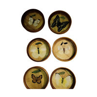 Vintage Preserved Butterfly Glass Bamboo Coasters Set of 6 Bar Ware Nature 3""