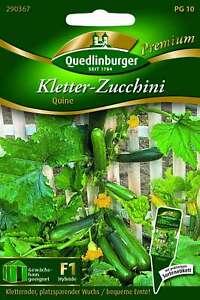 Saatgut - Samen Zucchini Kletter- Quine 290367 Quedlinburger AR5455