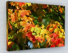 STUNNING AUTUMN TREE LEAVES CANVAS PICTURE PRINT CHUNKY FRAME LARGE 2266-2