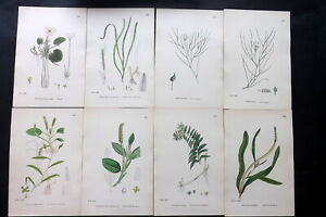Sowerby C1870 Lot of 14 Hand Col Botanical Prints. Book Plates