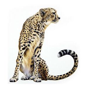 Cheetah Wild Animals Childrens Wall Stickers Decal Transfer Kids 4 Sizes