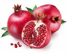 Pomegranate Punica Granatum Fruit Seeds 50 PCS