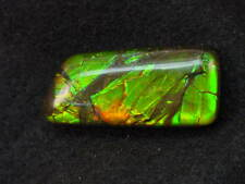 BUTW AA ammolite ammonite freeform cabochon 8166